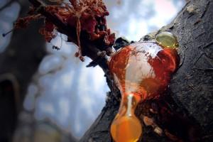 Янтарь - происхождение загадочного камня